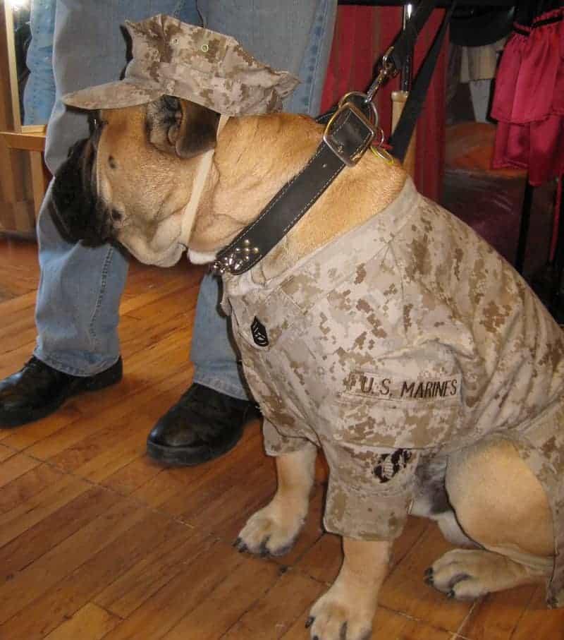 Custom Marine Corps Uniforms For Canines Mcgrew Studios